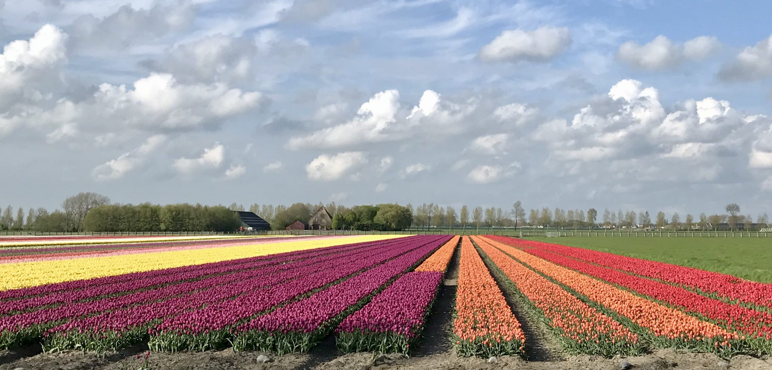 Beemster tulpenroute